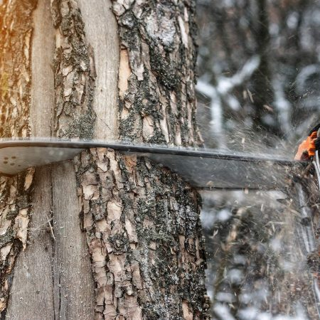 Best Chainsaw Chain — Review & Buying Guide